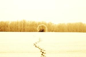 Zukunft weiße Winterlandschaft